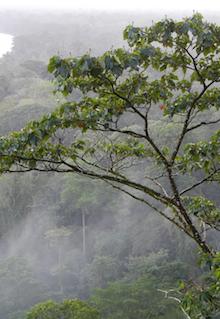 Torteguero Jungles