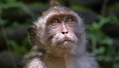 Bali's Monkey Temple