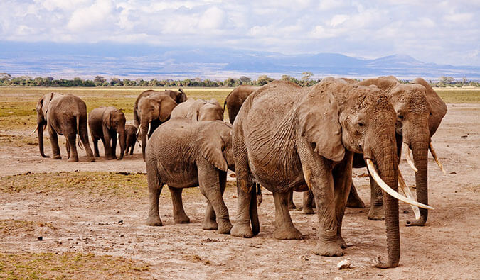 Six of the Greatest Safaris in Africa