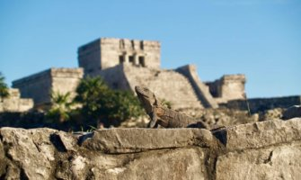 An iguana sitting on the ruins of Tulum with more ruins in the background
