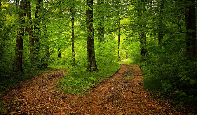 a fork path in the woods. Trees with brown leaves covering the paths in between them