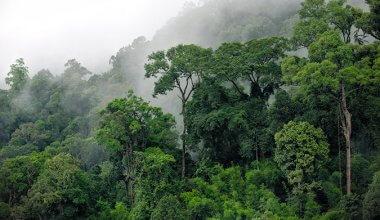 the jungle in Khaosok
