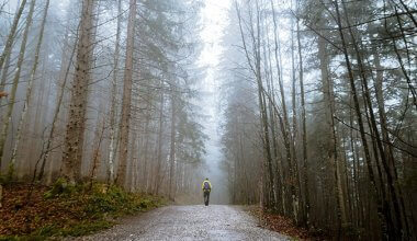 Man walking on a road through the middle of a misty forest with tall trees lining each side