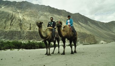 Man and a woman sitting on two camels