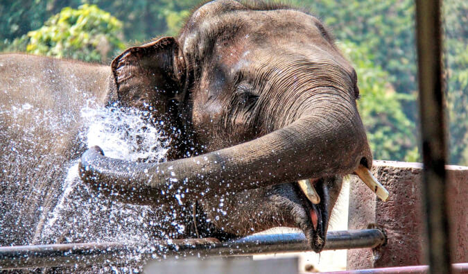elephant having fun splashing water on himself