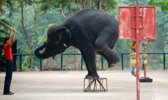 How You Can Help Stop Animal Abuse in the Tourism Industry