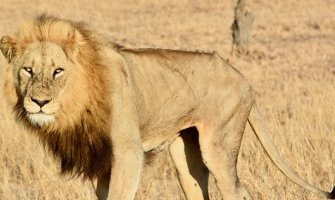 24 Photos from My Safari to Kruger National Park