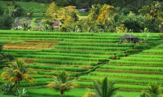The Jatiluwih Rice Terraces: A Visitor's Guide