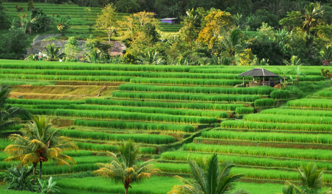 A Visitor's Guide to the Jatiluwih Rice Terraces