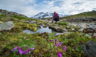 girl in Alaska crouched down touching a rock by a pool of water flowers in the foreground and snowcapped mountains in the background