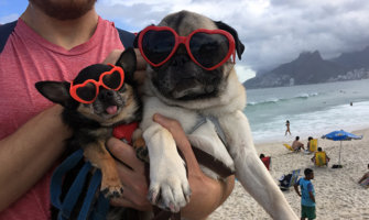 Pictures of two dogs in Brazil