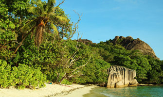 Seychelles beach scene with tropical jungle