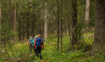 Senior travelers walking through the woods on a hike