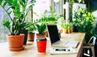 A laptop on a desk beside lush plants