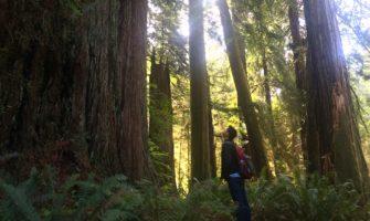 Nomadic Matt beside a giant redwood tree